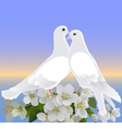 Two white doves and branch of blossoming apple tre vector image vector image