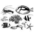 coral fish collection vector image vector image