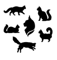 Maine Coon cat icons and silhouettes vector image vector image