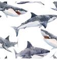 watercolor shark pattern vector image