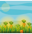 agriculture plantation vegetable carrot vector image vector image