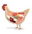 anatomy of chicken