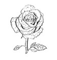 ink rose outline vector image vector image