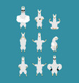 lama alpaca set poses and motion animal happy and vector image vector image