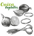 onion vegetable set hand drawn vector image vector image