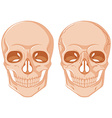 Two skulls on white background vector image vector image