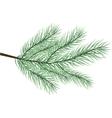fur-tree branch vector image