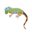 bright colored iguana isolated on white background vector image vector image