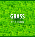 fresh grass seamless vector image vector image