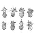 hand drawn sketch of pineapple vector image vector image