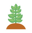 succulent in the soil vector image