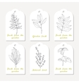 Tags collection with hand drawn spicy herbs dill vector image vector image