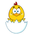 funny yellow chick cartoon character vector image vector image