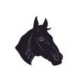 horse portrait silhouette vector image