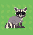 cute raccoon sitting of a vector image