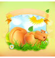 Fresh fruit label apricot background for making vector image