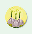 plantation vegetable harvesting garlic vector image vector image
