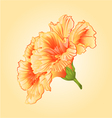 Yellow hibiscus tropical flowers blossom simple vector image vector image