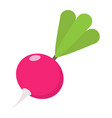 radish flat icon vegetable and diet vector image