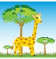 Wildlife zebra on nature vector image
