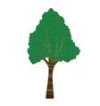 textured bark tree vector image