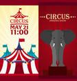 set circus banner circus ticket amazing show vector image
