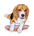 Beagle vector image