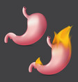 burning stomach realistic human organ internal vector image
