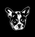 hand drawn bulldog vector image
