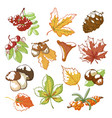 autumn hand drawn set vector image vector image