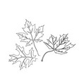 autumn leaves maple oak vector image vector image