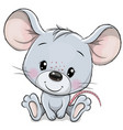 cartoon mouse isolated on a white background vector image