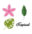 set of tropical leaves and flowers design vector image vector image