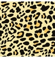 Seamless leopard fur vector image