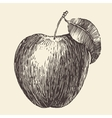 Apple Vintage Engraved Hand Drawn vector image
