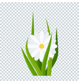 camomiles and a green grass on transparent vector image vector image