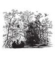 mangrove swamp vintage vector image vector image