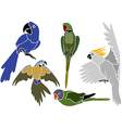 Set of Parrots Icons vector image vector image