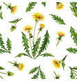 watercolor seamless pattern with dandelion vector image vector image
