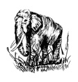 engraving elephant vector image vector image