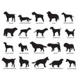 set dogs silhouettes vector image vector image