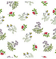 seamless pattern with hand drawn medicinal plants vector image vector image