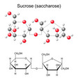 Chemical formula and model of sucrose vector image vector image