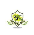 olive oil bottle label with black fruit on branch vector image vector image
