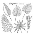 set of hand-drawn palm leaves and protea flower vector image