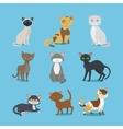 Cartoon domestic cat set vector image