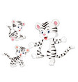 collection of the white tiger vector image vector image