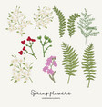 hand drawn fern leaves stock gillyflower and vector image