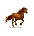 Horse running on sport races sketch vector image vector image
