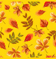 texture of autumn tree leaves isolated on yellow vector image
